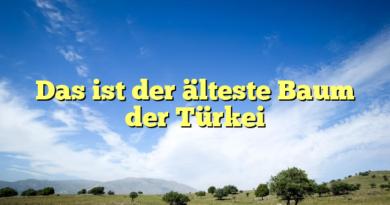 Das ist der älteste Baum der Türkei